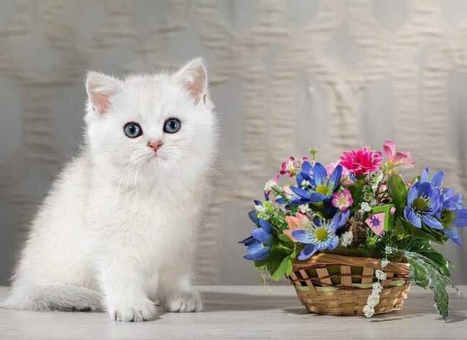 Котята наших друзей