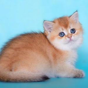 Кэсси Алламбато Дали, кошка, ny 25